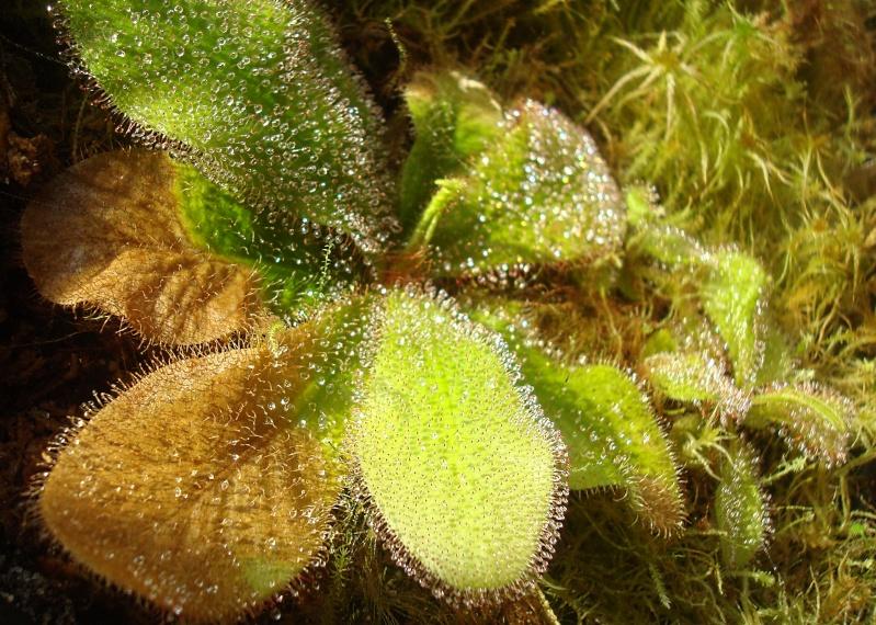 Les plantes de Ted82 - Page 22 D_schi11
