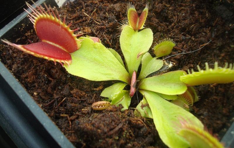 Les plantes de Ted82 - Page 22 Dio_au10