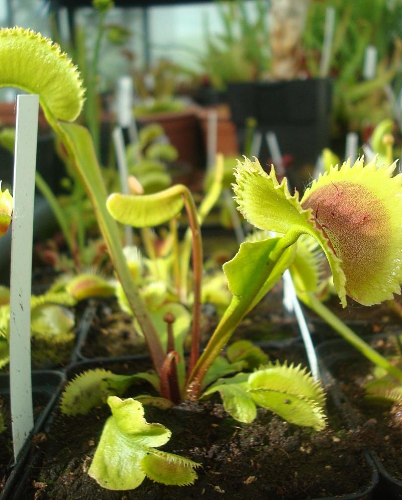 Les plantes de Ted82 - Page 22 Dio_sl10