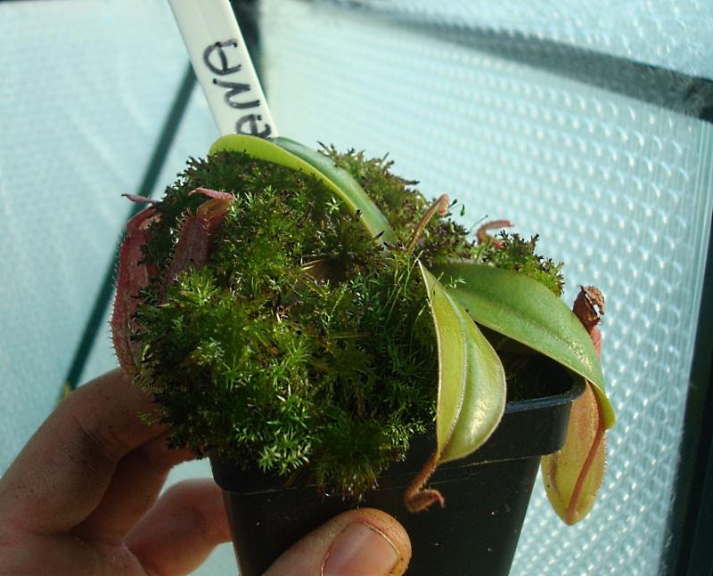 Plantes fin 2013 Dsc06624