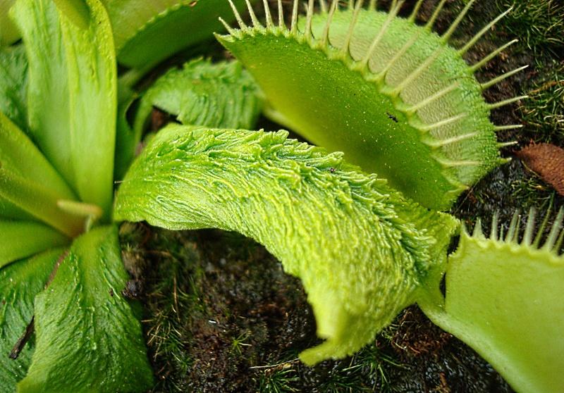 Les plantes de Ted82 - Page 21 Dsc07119