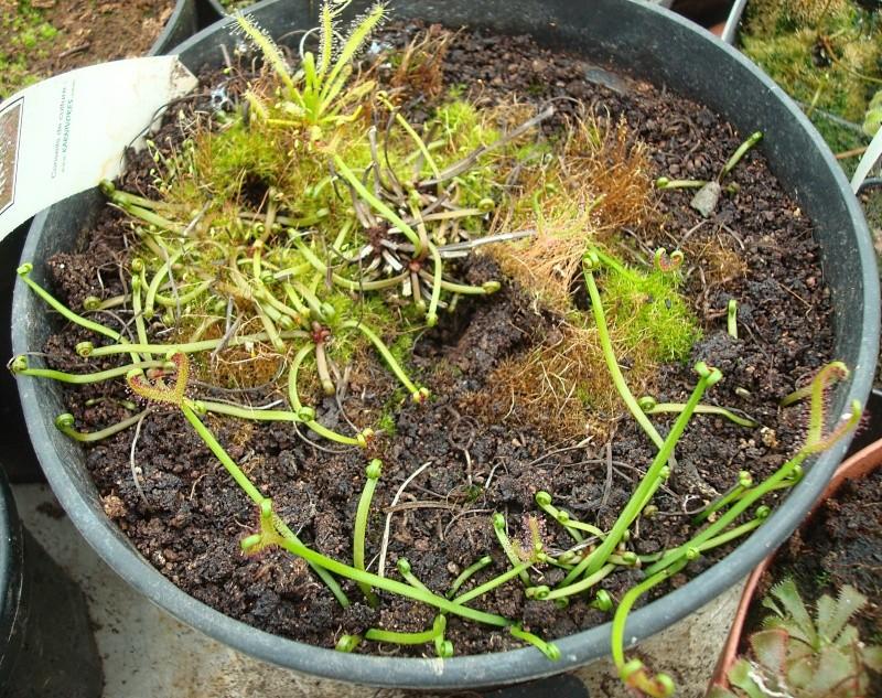 Les plantes de Ted82 - Page 21 Dsc07121