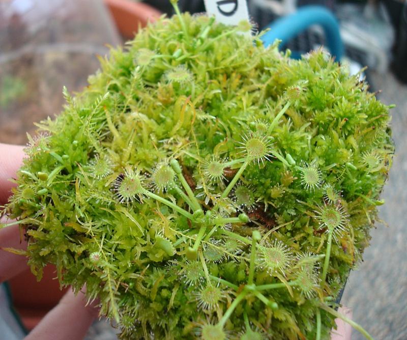 Les plantes de Ted82 - Page 21 Dsc07123