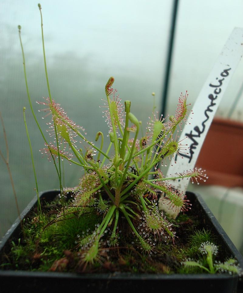 Les plantes de Ted82 - Page 21 Dsc07125