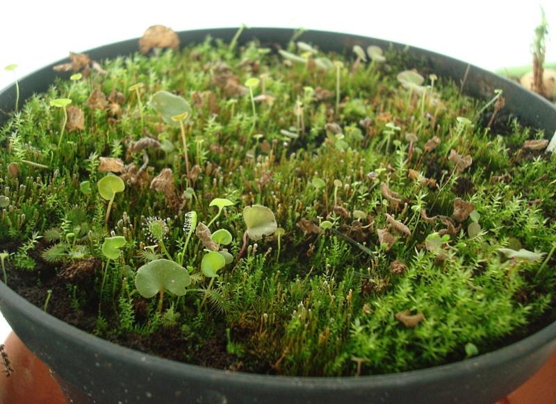 Les plantes de Ted82 - Page 21 Dsc07127