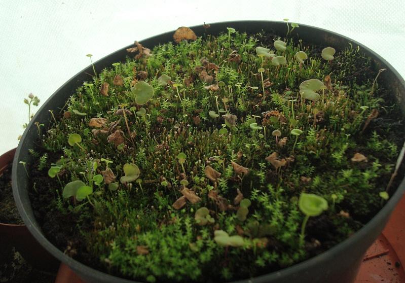 Les plantes de Ted82 - Page 21 Dsc07128