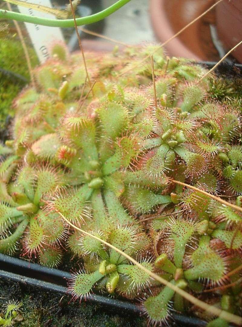 Les plantes de Ted82 - Page 22 Dsc07316