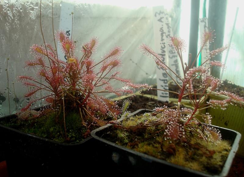 Les plantes de Ted82 - Page 22 Dsc07318