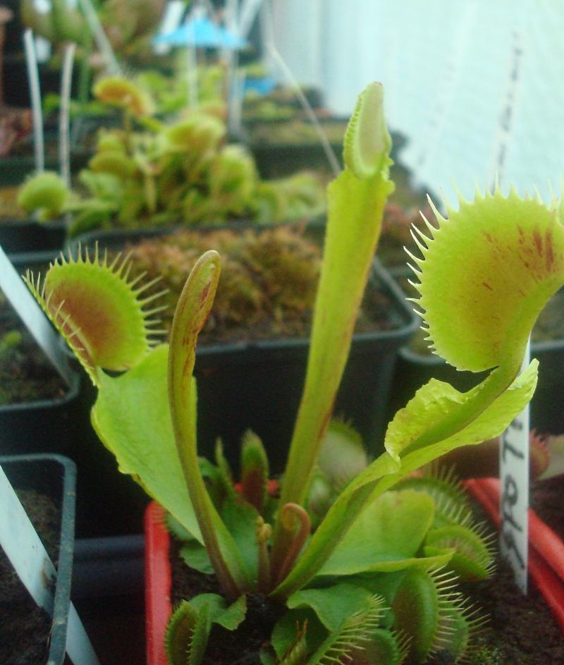 Les plantes de Ted82 - Page 22 Dsc07322