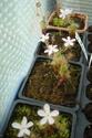 Les plantes de Ted82 - Page 21 Fleurs10