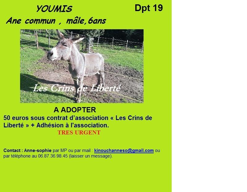Dpt19 - YOUMIS âne commun adopté par Jean Vincent et sa femme (2013) Fiche_10