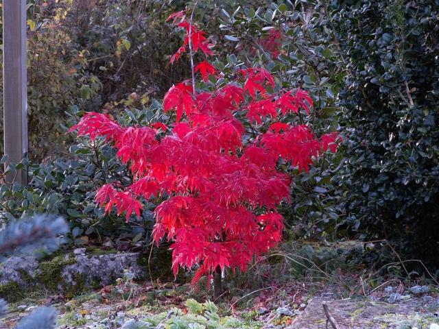 Concours: Les plantes nous en font voir de toutes les couleurs. Participations (photo normale) 00111