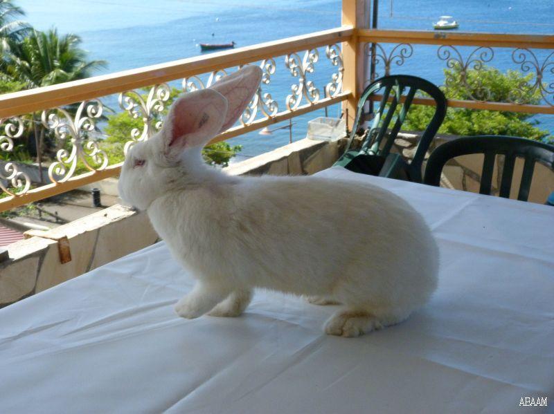 Les lapins de JB P1050113