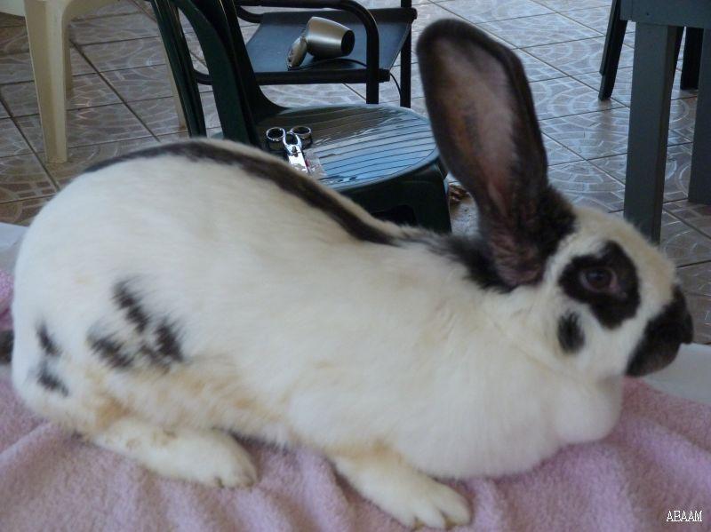 Les lapins de JB P1050216