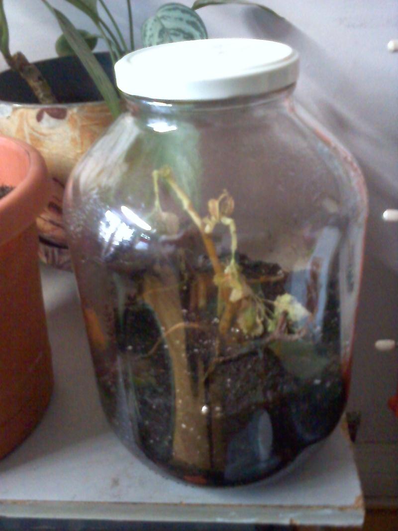 Mur végétal nu à planter 03141410