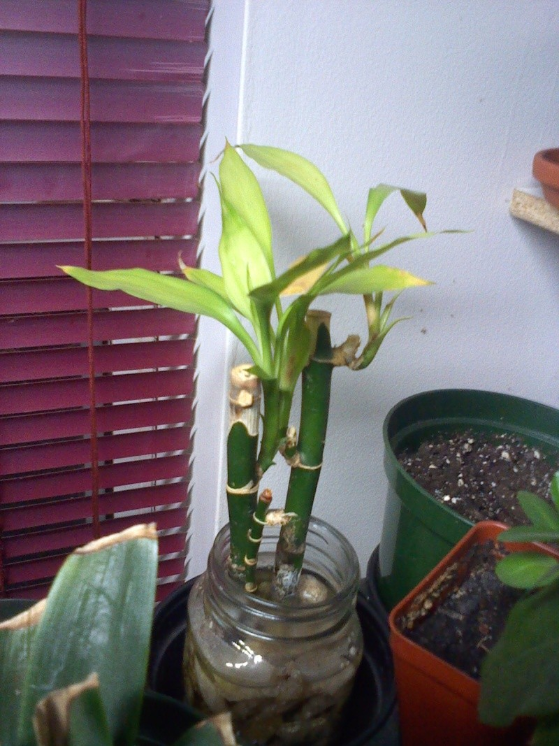 plantes malades 10281310