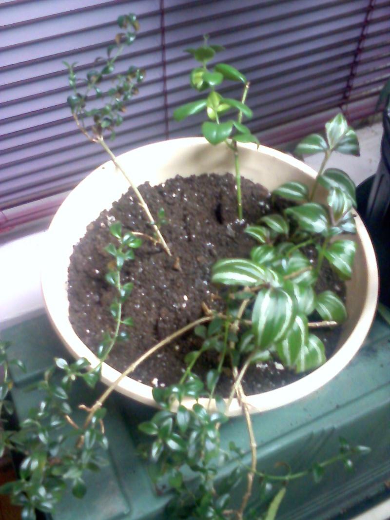 cohabitation planturale Mixt0510
