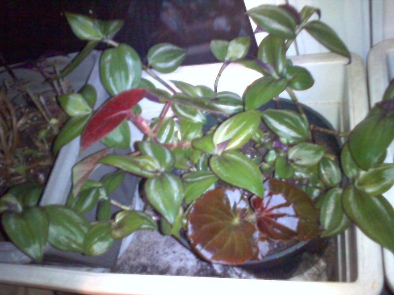 cohabitation planturale Mixt0512