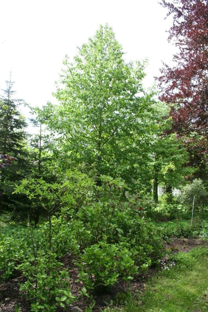 le jardin  - Page 3 Img_9410