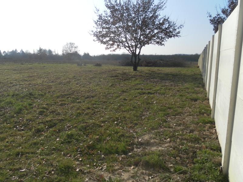 Protections fondations + distance entre chêne et maison Sam_0710