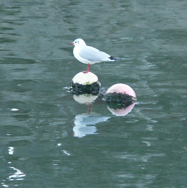 36 - Les reflets dans les flaques d'eau........ photos reçues !!! - Page 4 Pict2611