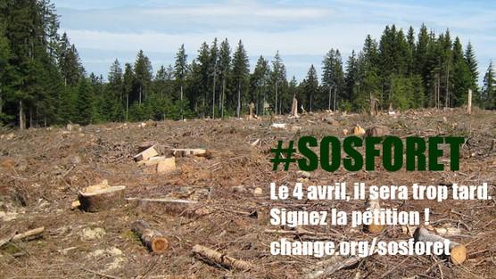 #SOSForêt : 30 jours pour sauver la forêt française !  Uicdgi10