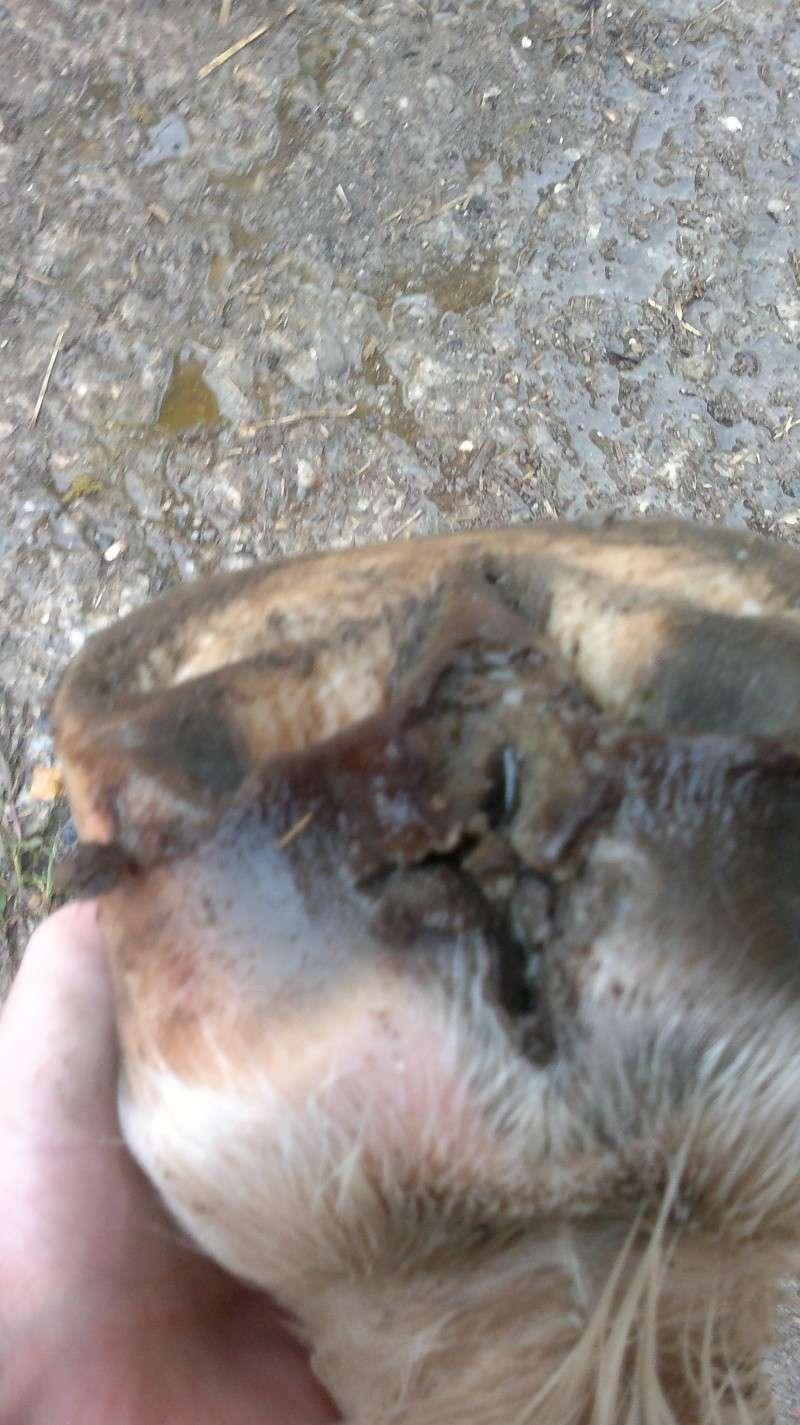Les pieds-pieds a Tam-Tam^^photos - Page 6 09102010