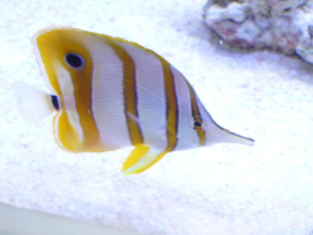 Aquarium recifal 1000L beber - Page 11 P1000729