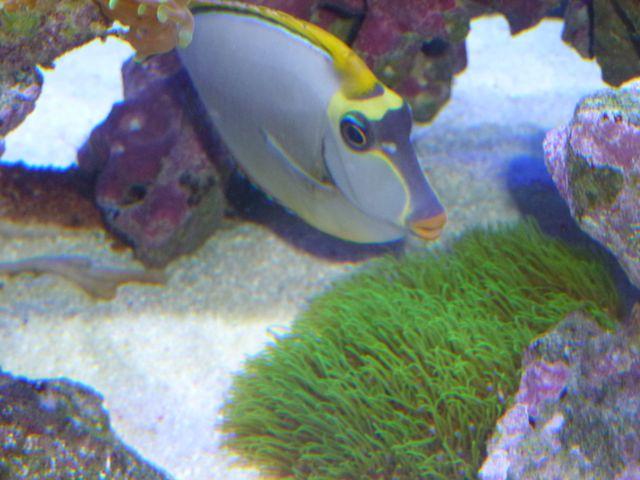 Aquarium recifal 1000L beber - Page 11 P1000730