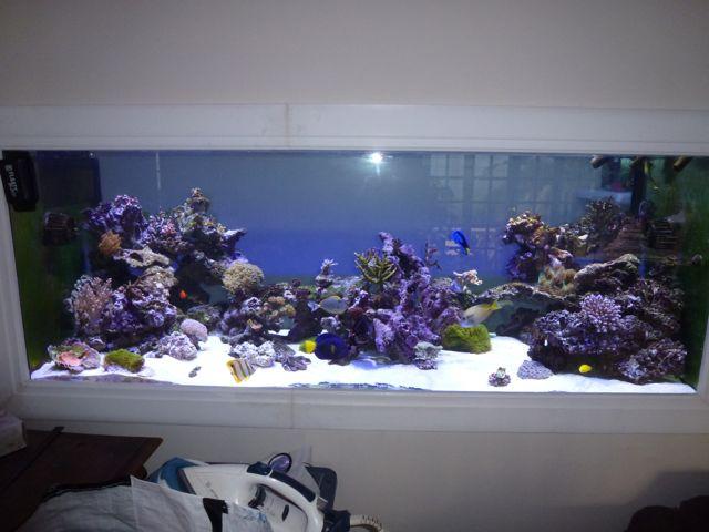 Aquarium recifal 1000L beber - Page 11 P1000733