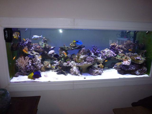 Aquarium recifal 1000L beber - Page 11 P1000740