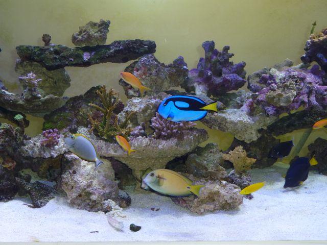 Aquarium recifal 1000L beber - Page 11 P1000741