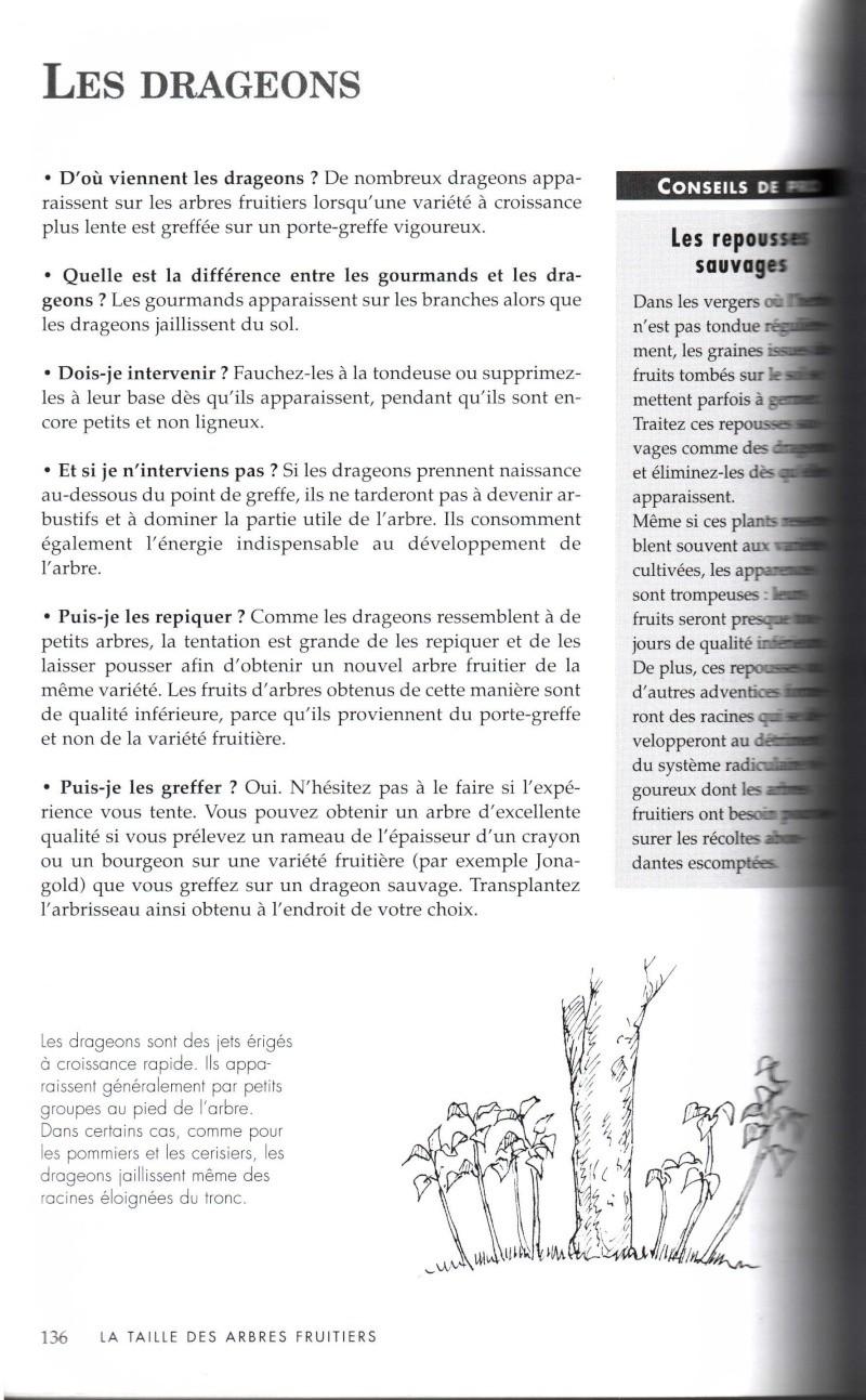Arbres fruitiers à rajeunir - Page 2 1011