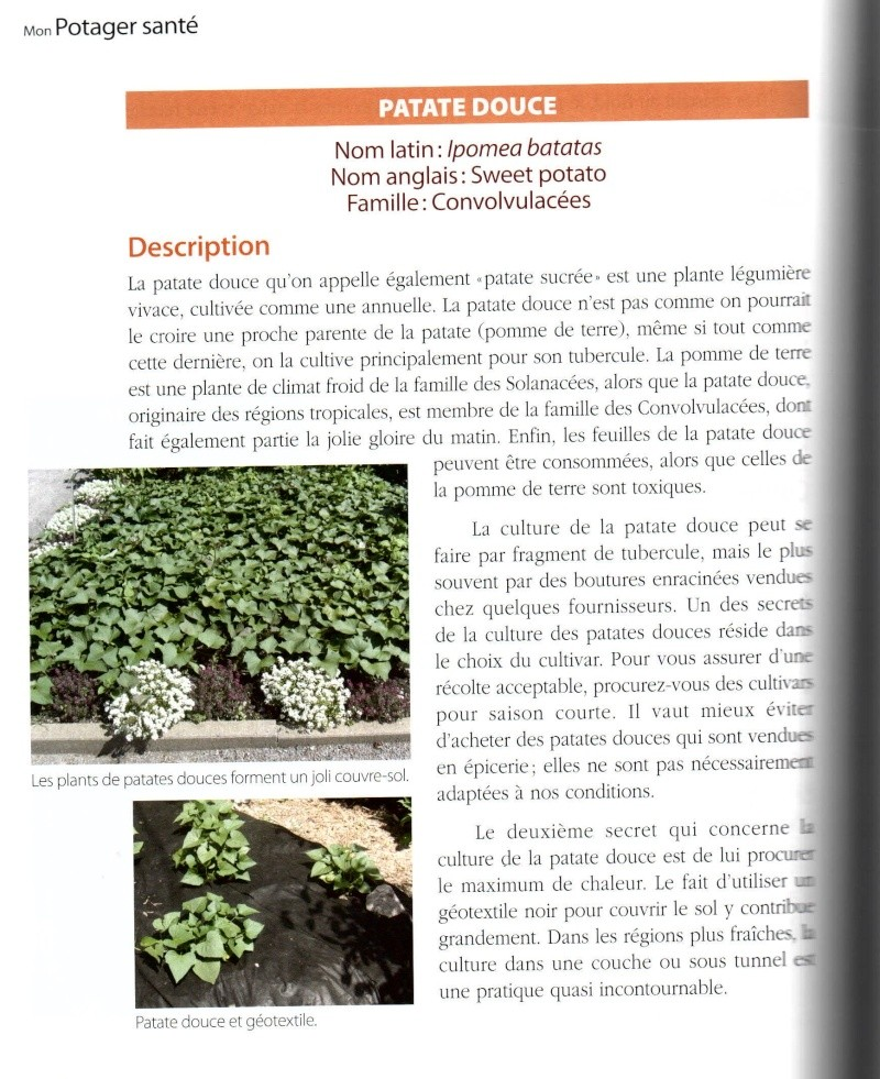 Patates douces - Page 2 19033410