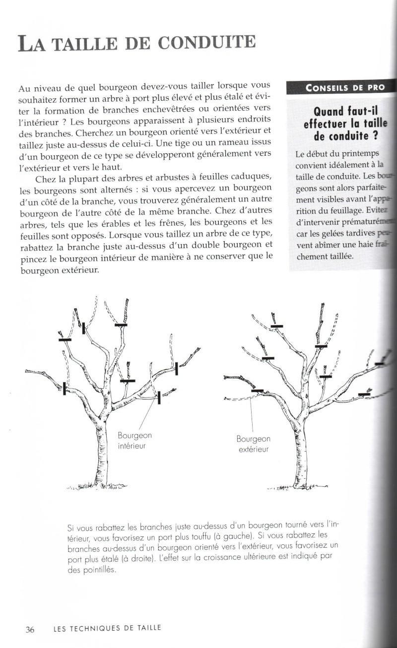 Arbres fruitiers à rajeunir - Page 2 313