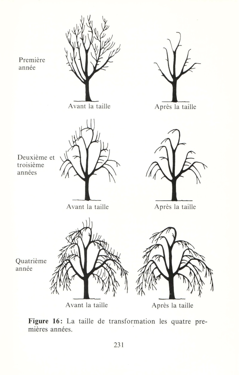 Arbres fruitiers à rajeunir - Page 2 510