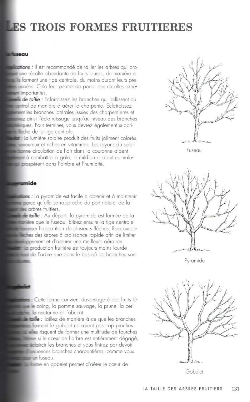 Arbres fruitiers à rajeunir - Page 2 513