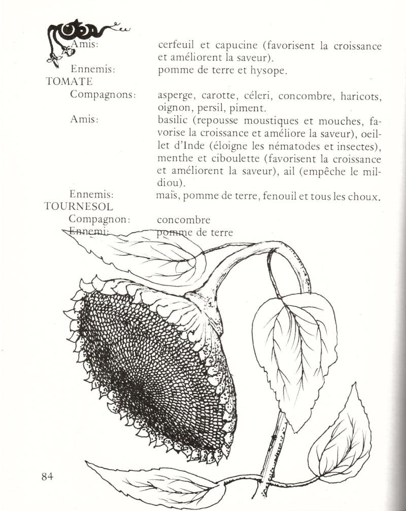 Association des légumes 611