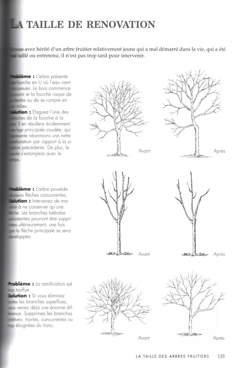 Arbres fruitiers à rajeunir - Page 2 711