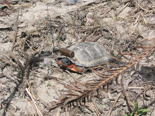 Animaux Sauvages Tortue10