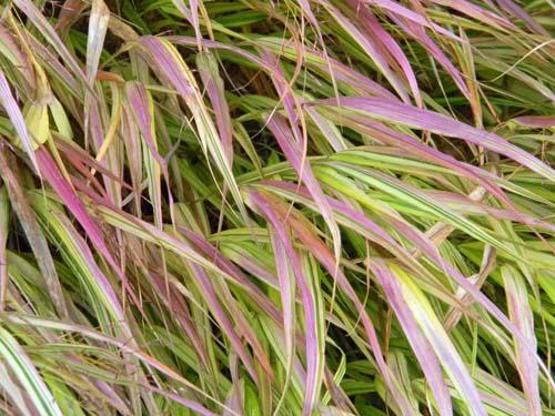 Concours: Les plantes nous en font voir de toutes les couleurs. Participations (photo normale) Grami10