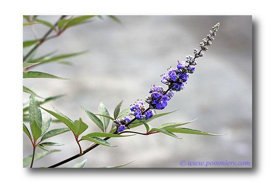 Les plantes. (Pour les soigneurs) Gattil10