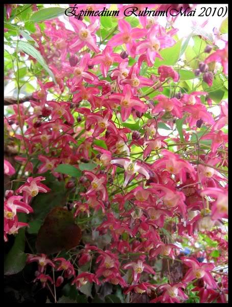 Les plantes. (Pour les soigneurs) Img_9010