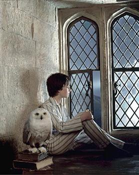 Les chouettes ! Potter10