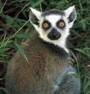 2013-2014 : phase 2 - Page 4 Lemur11