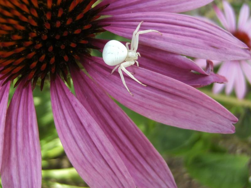 jolie petite araignée Jolie_10