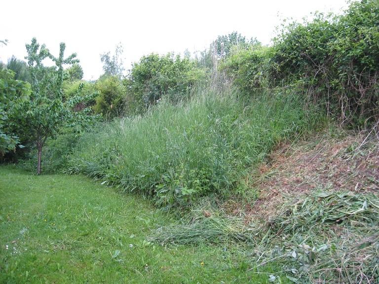 Plantation d'un talus 110