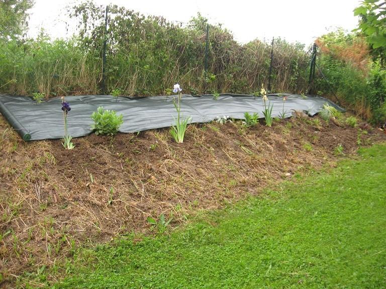 Plantation d'un talus 510