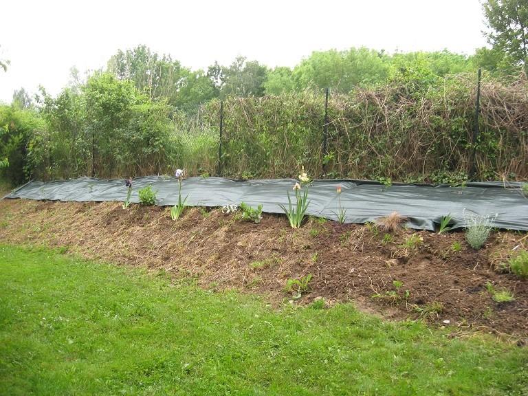 Plantation d'un talus 610