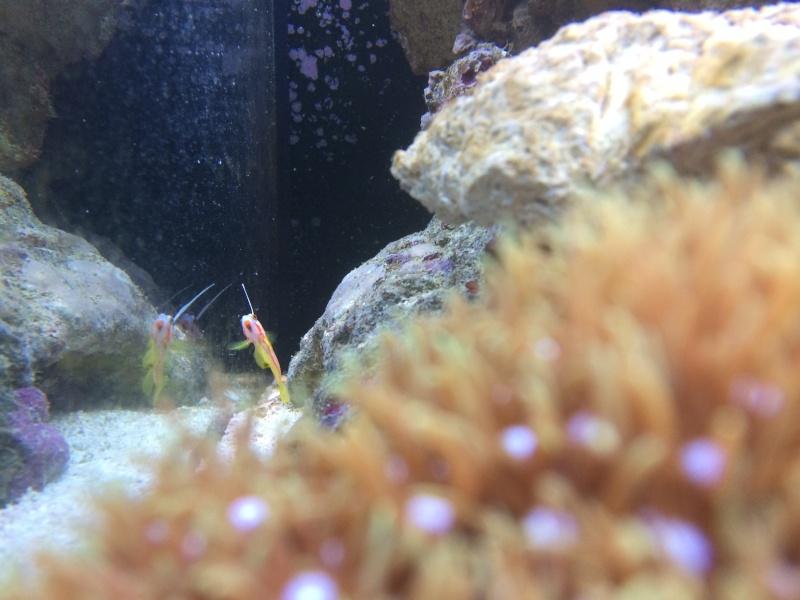 nano dennerle 60l devenue red sea Max 130D - Page 10 Photo_18